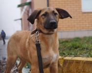 TWIN - Kříženec - pes štěně