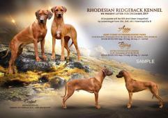 Rhodéský ridgeback - štěňátka