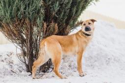 EMI - Kříženec - kastrovaný pes 2 roky