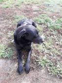 BODYHO čeká útulek! - Labradorský retrívr - pes