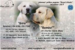 Labrador reriever - krásná štěňátka s PP