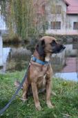 Endy )4 roky, 25 kilo) k adopci