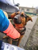 Monty (1,5 roku, 20 kilo) k adopci