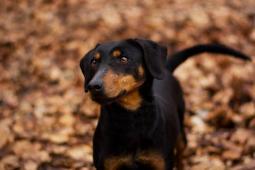 LUCY - Teriér x - fena  9 kg