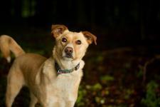 MAŤKO - Kříženec - pes