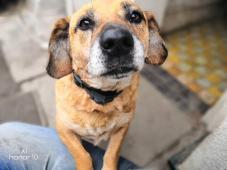 Bruno (7 let, 12 kilo) k adopci