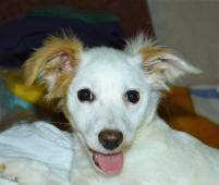 LANA - kříženec - štěně, fena 5 měsíců.