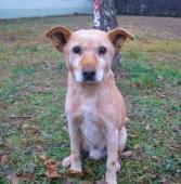 PUX - kříženec 9 kg - pes 10 a více let