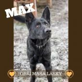 MAX krásný mladý ovčák
