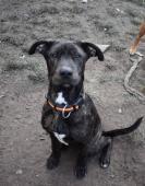 Buddy (10 měsíců, 20 kilo) k adopci