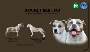 Szczeniaki z Hodowli ROCKET BABE FCI