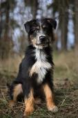 CALVIN - kříženec - štěně, pes 6 měsíců.