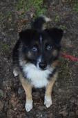 ŽOFRÉ - Kříženec - pes