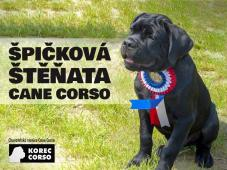 Špičková štěňata Cane Corso