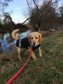 BADÍK - Kříženec - pes