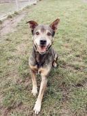 JACK - Kříženec střední - pes