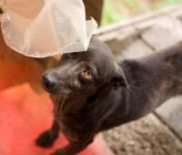 KALO - Kříženec menší - pes URGENT