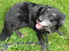 BENÍČEK - kříženec - pes 8 let