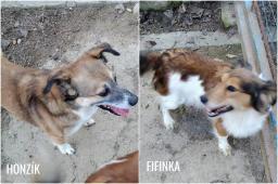 HONZÍK a FIFINKA - Kříženec menší - pes a fena.