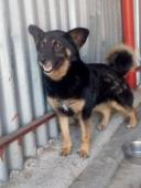 JESSINKA - kříženec 9 kg - kastrovaná fena 5 let