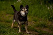 DERRICK - Kříženec - pes