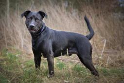 ŘÍZEK - kříženec 27 kg - kastrovaný pes 2-3 roky.
