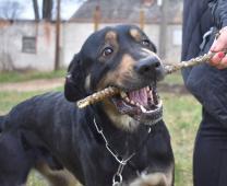 Denny (2 roky, 30 kilo) k adopci