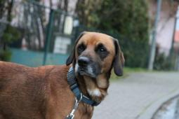 Endy (4 roky, 25 kilo) k adopci