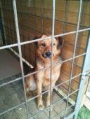 OLIVER - kříženec - kastrovaný pes cca 7 let.