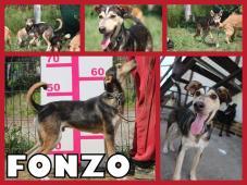 FONZO hľadá domov
