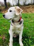 RUPERT - Kříženec větší - štěně pes