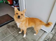 MiniJack - kříženec 6 kg - kastrovaný pes 2 roky