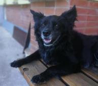 ČIKYNEK - Špic x malinký kříženec - pes 10 let