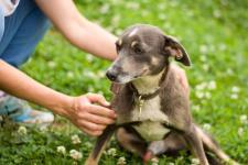 GORBY - Kříženec malý - pes