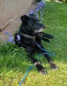BENNY - Kříženec - pes