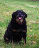 BELLA - kříženec - kastrovaná fena 12 let
