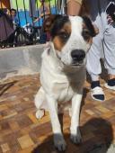 ŤAPKO - Kříženec - pes 1 rok.