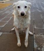 BELKA a BROČKO - Kříženec menší - pes a fena