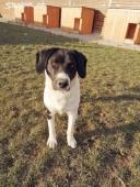 KENY a LUSY - Kříženec - pes a fena