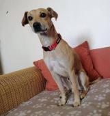 JACK - kříženec 9,5 kg - kastrovaný pes 2 roky
