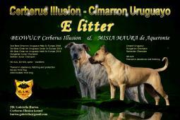 Uruguajský Cimarron (cimarron uruguayo) s PP