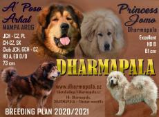 Tibetská doga štěňata s PP 2020/21