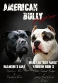 Prodám American Bully standard