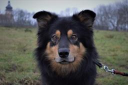 MAUGLÍ - Kříženec - pes