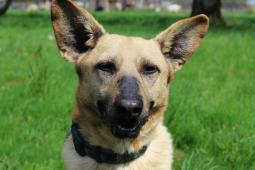 RIČI - Kříženec - pes 8 let
