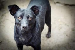 MILOUŠEK - kříženec - kastrovaný pes, 5 let