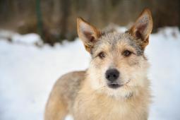 FRENK - kříženec 23 kg - kastrovaný pes 1,5 roku