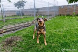 MATEO - Kříženec - pes