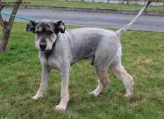 KANT - kříženec - pes 5 let