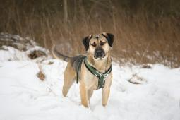 ROGER - kříženec 25 kg - kastrovaný pes 2 roky